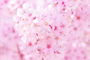 春の写真・画像素材[558066]