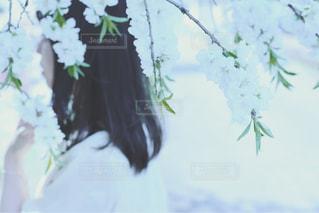 春の写真・画像素材[1064772]