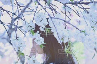 春の写真・画像素材[1064784]