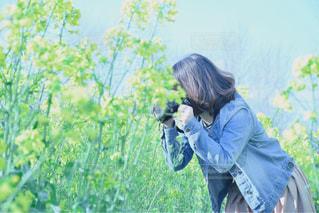菜の花畑の写真・画像素材[1107766]