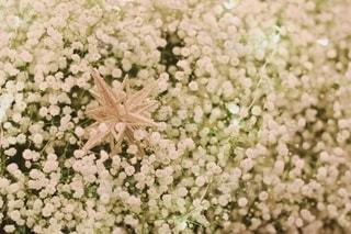 花をクローズアップするの写真・画像素材[2768781]