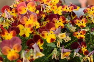 花をクローズアップするの写真・画像素材[2779747]