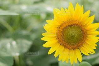 花をクローズアップするの写真・画像素材[2779806]