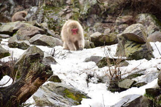 猿の写真・画像素材[3835928]