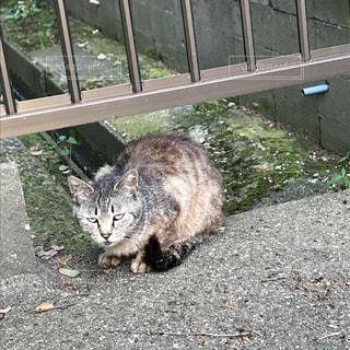 猫の写真・画像素材[518290]