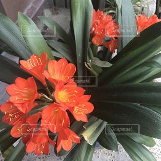 花の写真・画像素材[519575]
