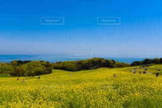 花の写真・画像素材[496606]