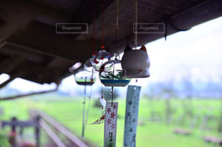 夏の写真・画像素材[497809]