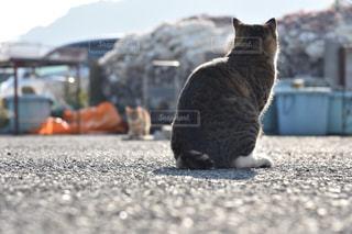 No.510342 猫