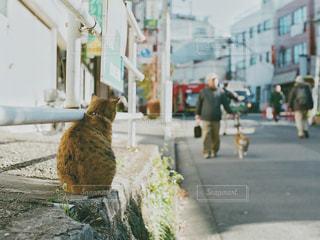猫の写真・画像素材[498765]