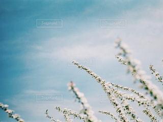 自然の写真・画像素材[498769]