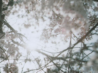 自然の写真・画像素材[498773]