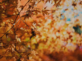 自然の写真・画像素材[500381]