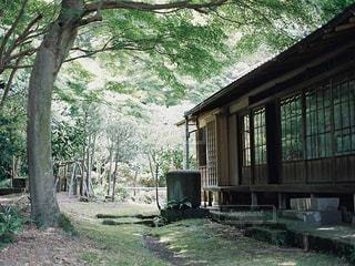 背景の木と家の写真・画像素材[1443036]