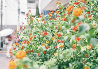 近くの花のアップの写真・画像素材[1445610]