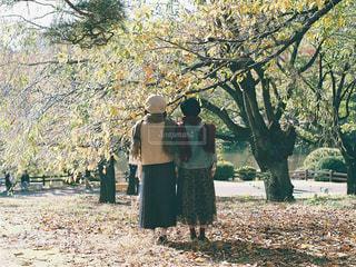 木の隣に立っている人の写真・画像素材[1641038]