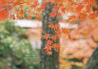 植物の木の成長の写真・画像素材[1668388]
