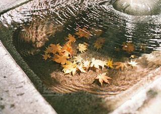 水の中を泳ぐ鳥の写真・画像素材[1668396]