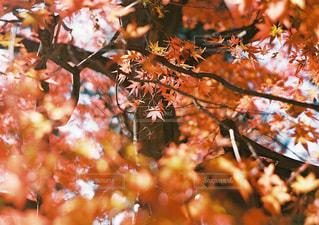 木の上に座ってピザの写真・画像素材[1668397]