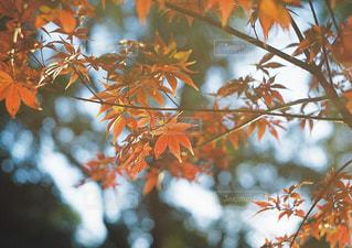 木の近くでの写真・画像素材[2836882]
