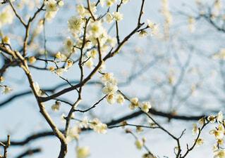 木の枝に止まっている小鳥の写真・画像素材[4252630]