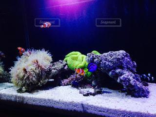 熱帯魚の写真・画像素材[496549]