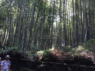 京都 - No.497584