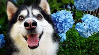 No.502331 犬