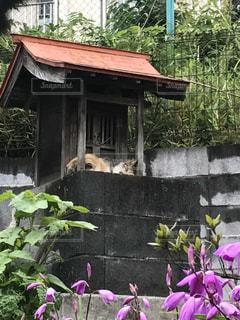 猫 - No.497197