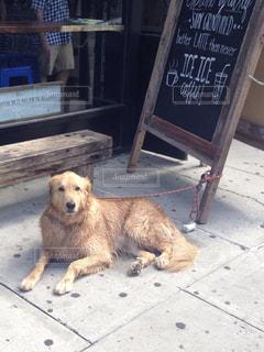 犬の写真・画像素材[497510]