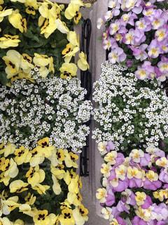 春の写真・画像素材[497523]