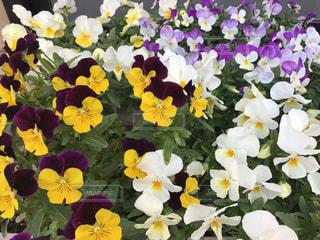 春の写真・画像素材[497524]