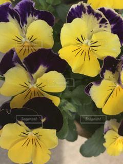 花の写真・画像素材[497614]