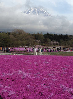 富士山の写真・画像素材[497669]