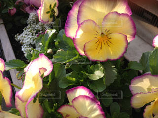 春の写真・画像素材[497698]