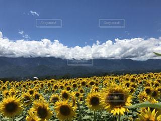 夏の写真・画像素材[672437]
