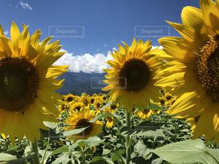 夏の写真・画像素材[672442]
