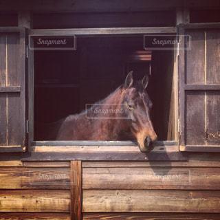#馬の写真・画像素材[497278]