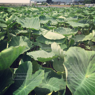 近くの緑の植物をの写真・画像素材[708566]
