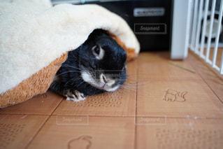 眠いの写真・画像素材[3166972]