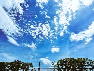 空の写真・画像素材[636281]