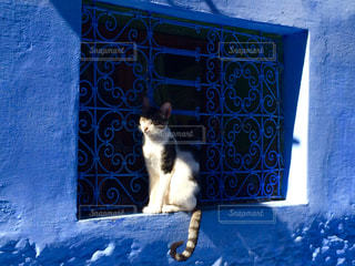 猫の写真・画像素材[512068]