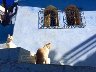 猫の写真・画像素材[512079]