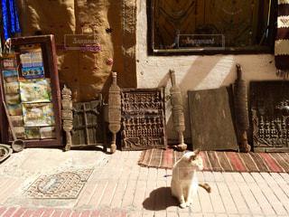 猫の写真・画像素材[512090]