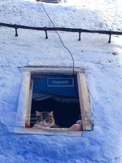 猫の写真・画像素材[512686]