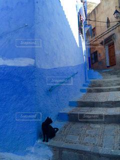 猫の写真・画像素材[512691]