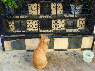 猫の写真・画像素材[514540]