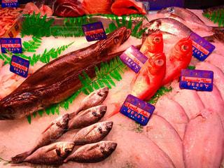 魚の写真・画像素材[514545]