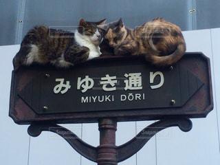 猫の写真・画像素材[537754]