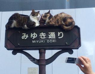 猫の写真・画像素材[537755]